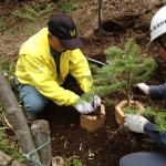 苗木と培養土