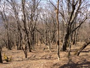 高塚山山頂の原生林