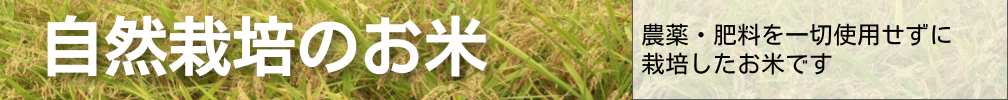 静岡県吉田たんぼの自然栽培のお米